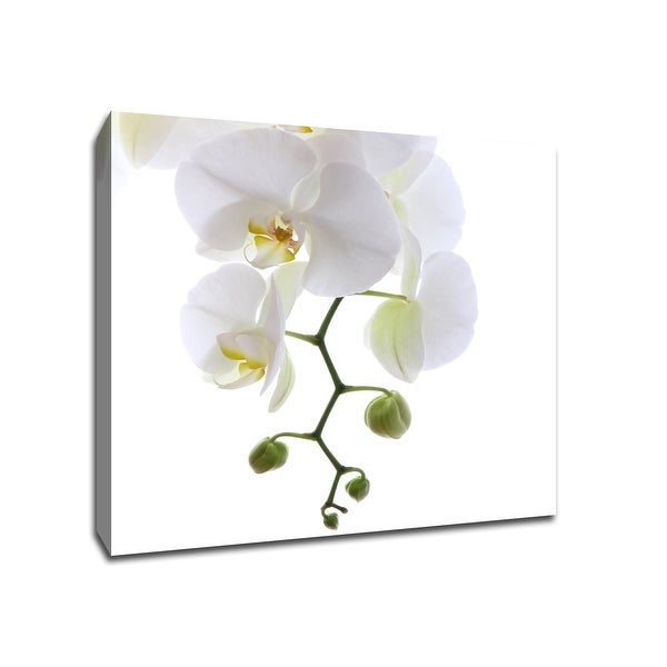 Orchid - Flowers - 20x20 Gallery Wrapped Canvas Wall Art