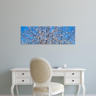 Easy Art Prints Panoramic Images's 'Cherry tree in bloom, Germany' Premium Canvas Art