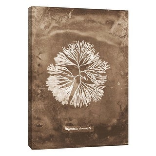 """PTM Images 9-105806  PTM Canvas Collection 10"""" x 8"""" - """"Natural Forms Sepia 6"""" Giclee Seaweed Art Print on Canvas"""