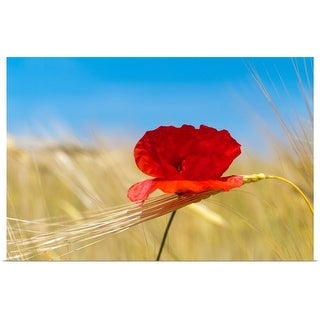 """""""Wheat stalks and poppy in field with blue summer sky as background."""" Poster Print"""