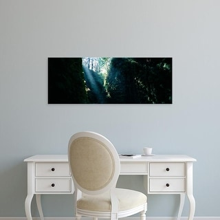 Easy Art Prints Panoramic Images's 'Sun beam in a canyon, Fern Canyon, Prairie Creek State Park, California' Canvas Art