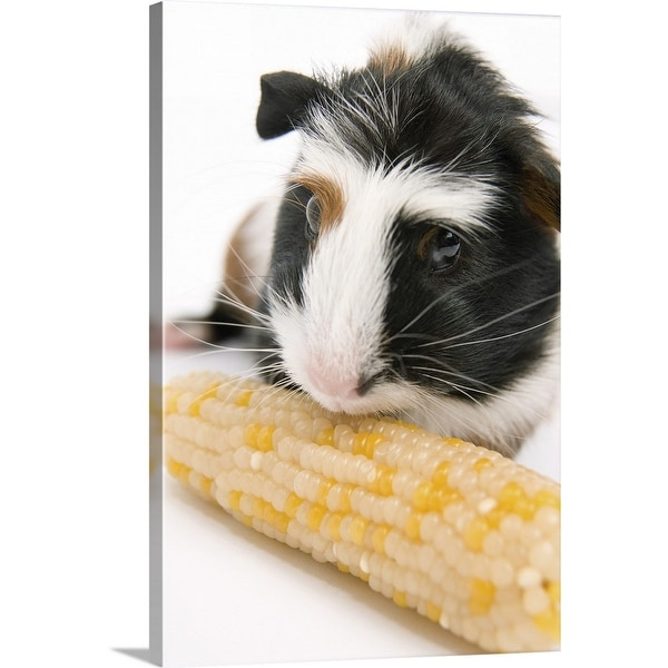 """""""Guinea pig with corn"""" Canvas Wall Art"""