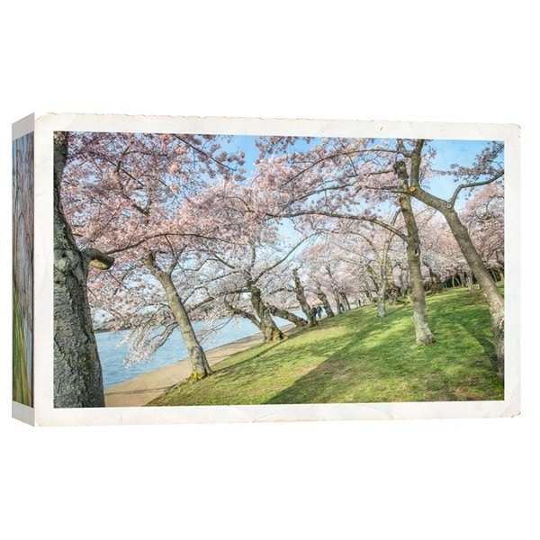 "PTM Images 9-103792 PTM Canvas Collection 8"" x 10"" - ""Cherry Blossoms 3"" Giclee Forests Art Print on Canvas"