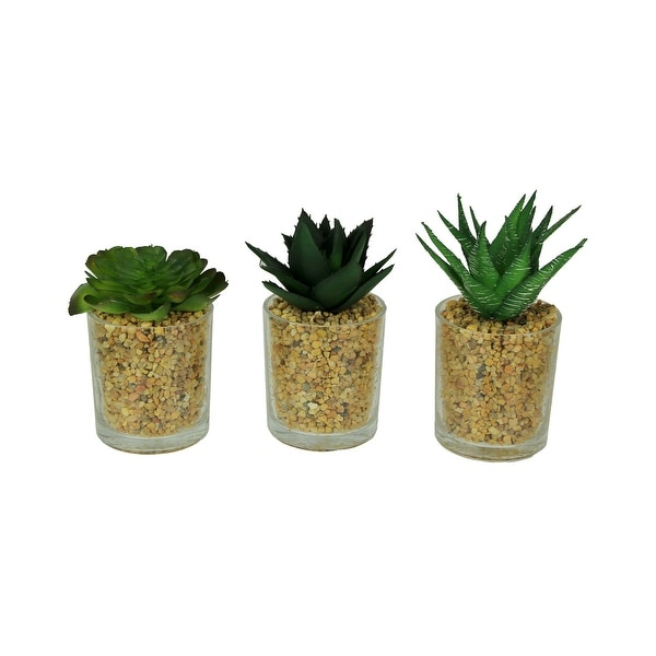 Artificial Succulent Plants in Glass Planter Mini Potted Gravel Garden Set of 3 - 6.5 X 3 X 3 inches