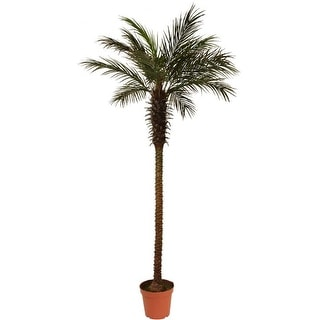 8' Decorative Potted Artificial Brown and Green Phoenix Palm Tree
