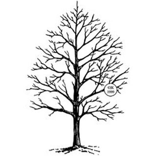 "Winter Tree - Judikins Rubber Stamp 4""X2.75"""