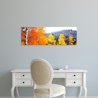 Easy Art Prints Panoramic Image 'Aspen trees, Blacktail Butte, Grand Teton National Park, Wyoming' Canvas Art