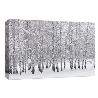 """PTM Images 9-153781  PTM Canvas Collection 8"""" x 10"""" - """"Grove of Aspen Trees in Winter"""" Giclee Forests Art Print on Canvas"""