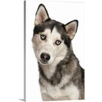 Premium Thick-Wrap Canvas entitled Siberian Husky puppy - Multi-color