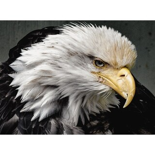 Bald Eagle Portrait Photograph Wall Art Canvas