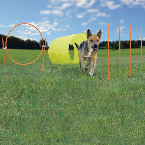 Outward Hound Dog Agility Starter Kit Outdoor - Yellow