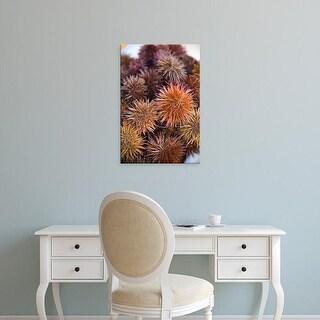 Easy Art Prints Walter Bibikow's 'Sea Urchins' Premium Canvas Art