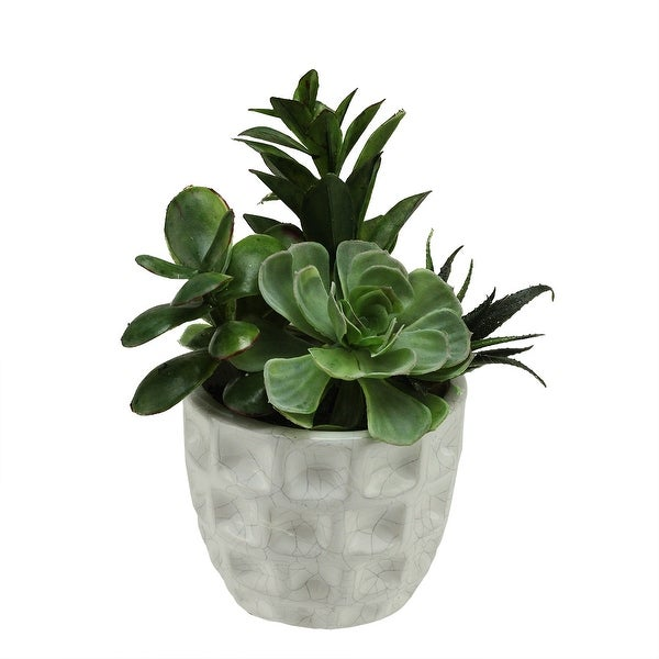 """9.5"""" Artificial Mixed Green and Red Succulent Plants in a White Crackle Finish Dimpled Pot"""