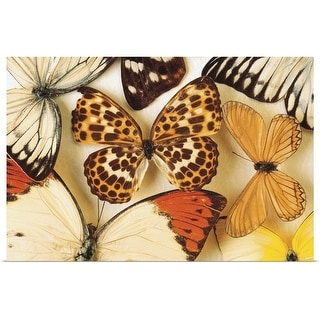 """""""Butterfly collection"""" Poster Print"""