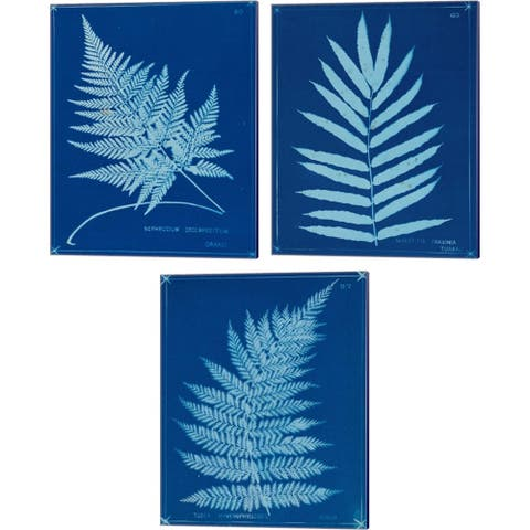 Unknown 'Cyanotype Ferns A' Canvas Art (Set of 3)