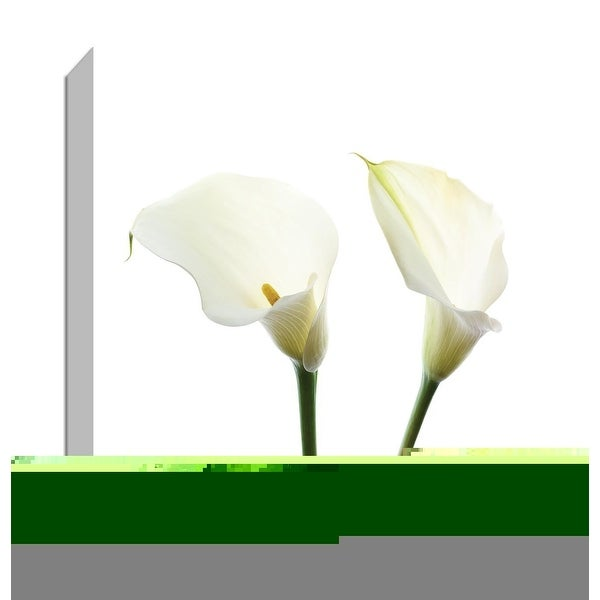 """PTM Images 9-147546 PTM Canvas Collection 12"""" x 12"""" - """"White Beauty V"""" Giclee Flowers Art Print on Canvas"""