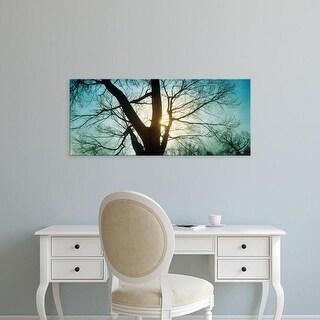 Easy Art Prints Panoramic Image 'Sunlight, bare tree, Prospect Park, Brooklyn, Manhattan, New York City' Canvas Art