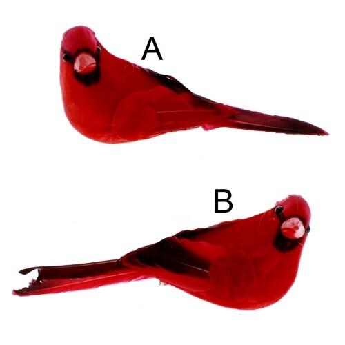 Velvet Cardinal