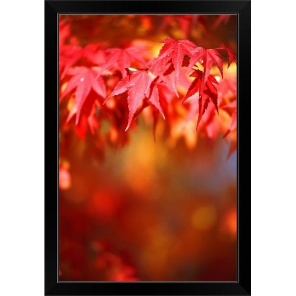 """Maple leaf in autumn (differential focus)"" Black Framed Print"
