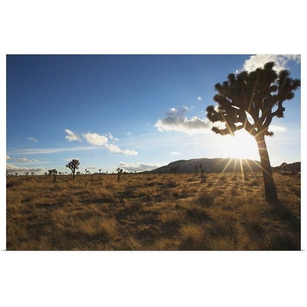 """Desert landscape with tree and blue sky"" Poster Print"