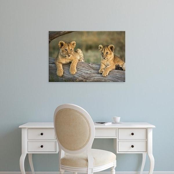 Easy Art Prints Adam Jones's 'Lion Cubs On Log' Premium Canvas Art