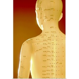 """""""Rear view of acupuncture model"""" Poster Print"""
