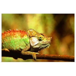 """Chameleon on branch, close up"" Poster Print"