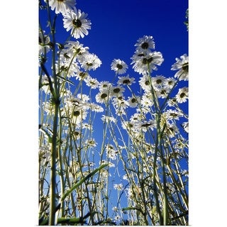 """""""Low-Angle View Of Blooming Wildflowers"""" Poster Print"""