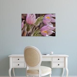 Easy Art Prints Chuck Haney's 'Pasque Flowers' Premium Canvas Art