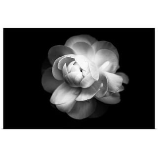"""""""Ranunculus flower in black and white."""" Poster Print"""