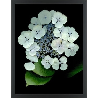 Easy Art Prints Alan Blaustein's 'Floral Color #25' Premium Canvas Art