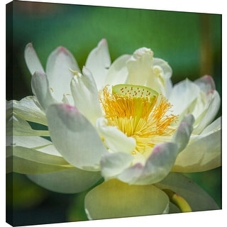"""PTM Images 9-101264  PTM Canvas Collection 12"""" x 12"""" - """"Lotus Lily 2"""" Giclee Lotus Art Print on Canvas"""