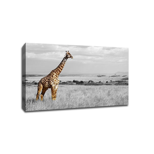 Giraffe in The Field - Touch of Color - 24x16 Gallery Wrapped Canvas ToC