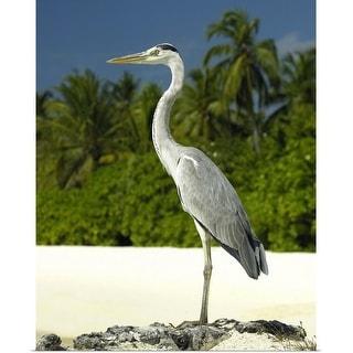 """Heron on a tropical beach"" Poster Print"