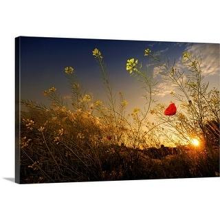 """Poppy under sunset light."" Canvas Wall Art"