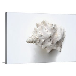 Premium Thick-Wrap Canvas entitled White conch shell