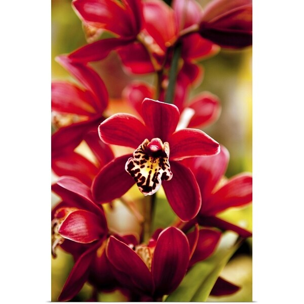 """Red Orchid flowers."" Poster Print"