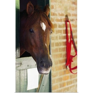 """""""Close-up of a horse"""" Poster Print"""