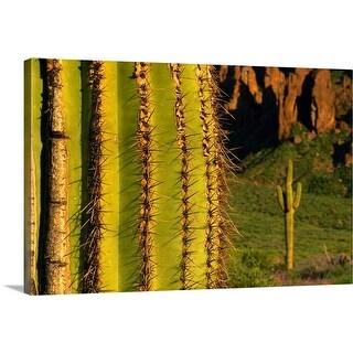 """Saguaro cactus, Superstition Mountains, Arizona"" Canvas Wall Art"