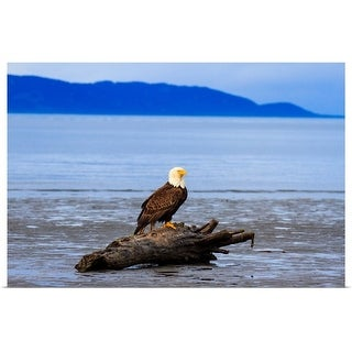 """""""Bald Eagle on old tree at beach"""" Poster Print"""