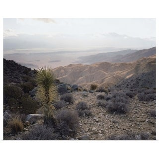 """Joshua Tree and Horizon"" Poster Print"