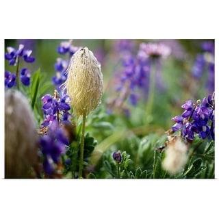 """""""Wildflowers In Bloom"""" Poster Print"""