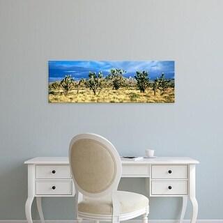 Easy Art Prints Panoramic Image 'Joshua trees, Mojave National, Mojave Desert, San Bernardino, California' Canvas Art