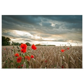 """""""Poppies in wheat field with clouds"""" Poster Print"""