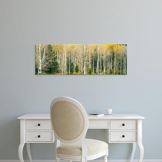 Easy Art Prints Panoramic Image 'Dense of Aspen trees in forest, Grand Teton National Park, Teton, Wyoming' Canvas Art
