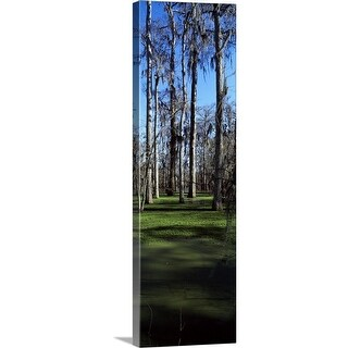 """Trees in a forest, Bijou, Louisiana"" Canvas Wall Art"