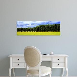 Easy Art Prints Panoramic Images's 'Row Of Trees, Uppland, Sweden' Premium Canvas Art