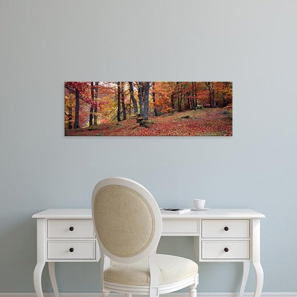 Easy Art Prints Panoramic Images's 'Beech trees in autumn, Aberfeldy, Perth and Kinross, Scotland' Premium Canvas Art