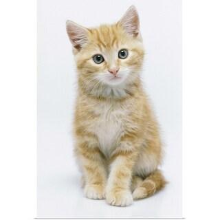 """Portrait of a kitten"" Poster Print"