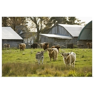 """""""Donkey with Highland Cattle in Pasture, Burnt River, Ontario, Canada"""" Poster Print"""